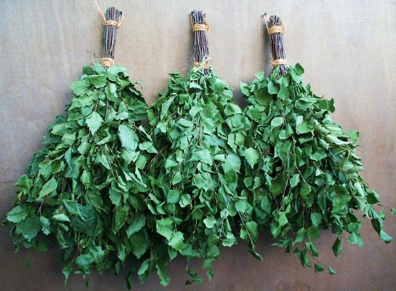 Как заготовить веники для бани: важные моменты 4-7